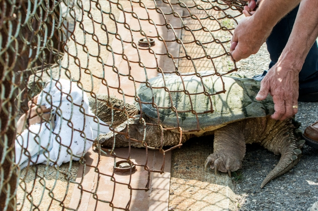 Moving Turtle Under Fence