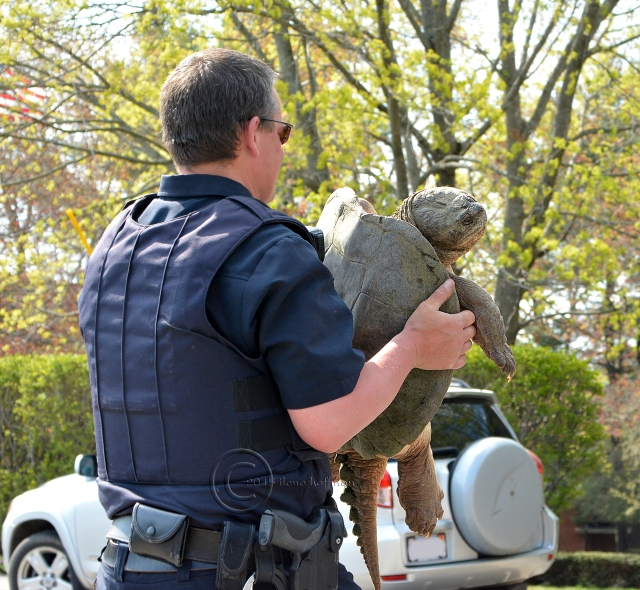 Officer Carrying Turtle