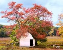 Owen's Poultry Farm in Autumn