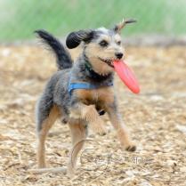 Random Dog with Frisbee