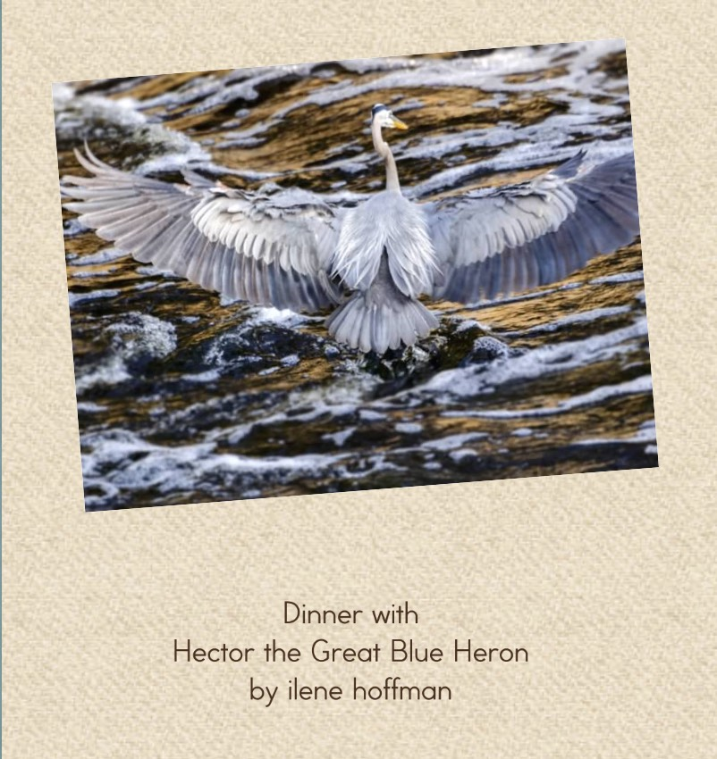Hector the Great Blue Heron Book Cover