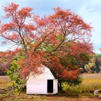 Owen's Poultry Farm Autumn