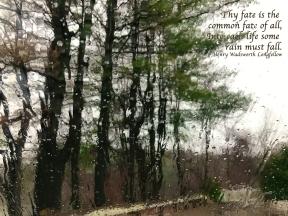 Rosemary Street Rain