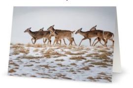 Deer Herd Card