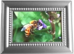 Honeybee in Frame