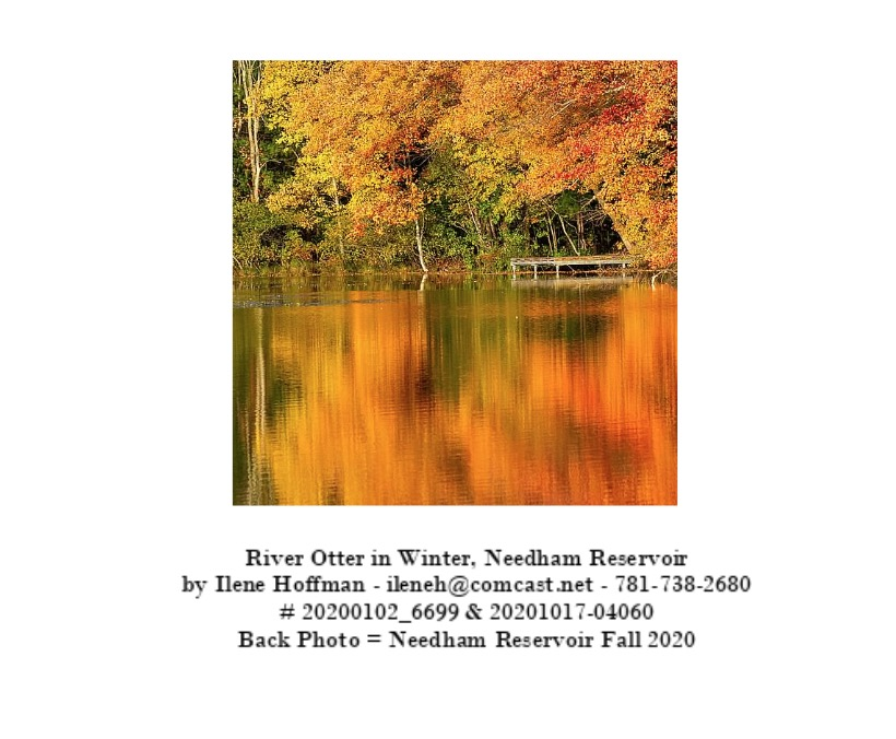 Bakc of River Otter Card